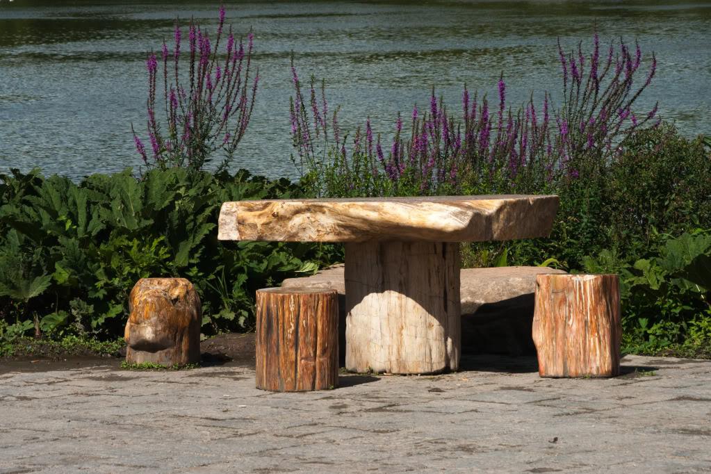 Structures et bois fossiles Cl-3
