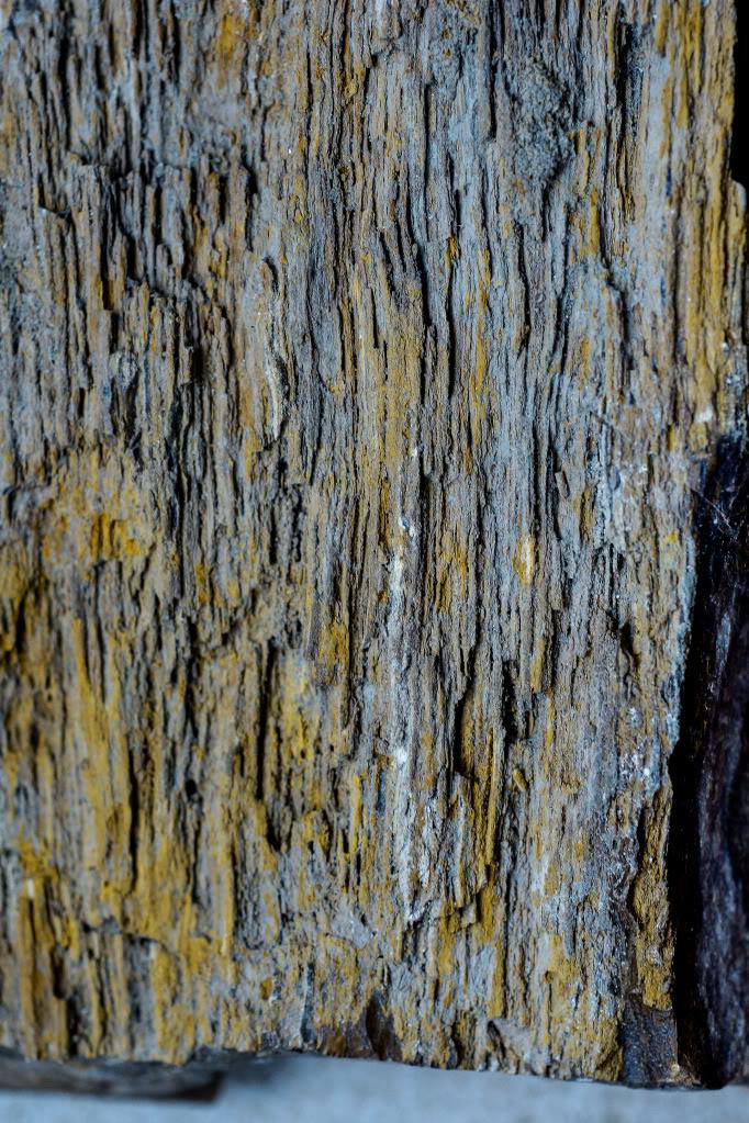 Structures et bois fossiles Cl-4-1