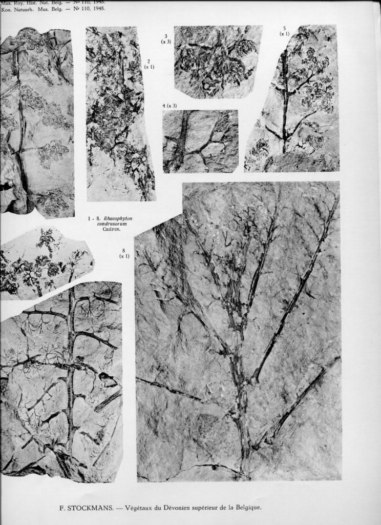 Végétaux du Dévonien NVt0411024x768