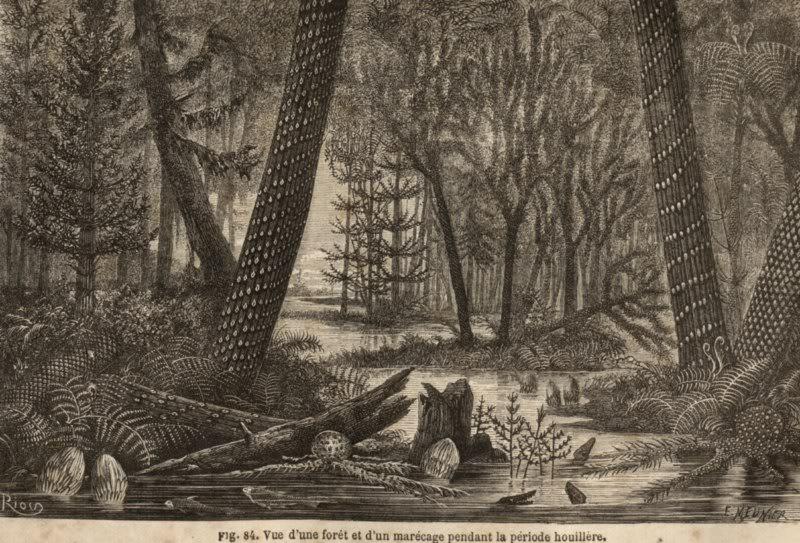 Représentation bidimensionnelle de la forêt houillère PLANCHES-2800x600