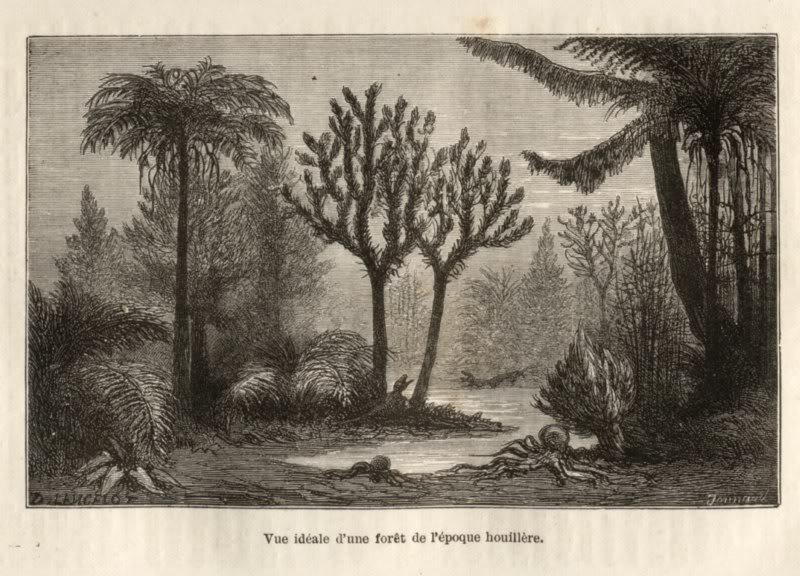 Représentation bidimensionnelle de la forêt houillère PLANCHES-5800x600