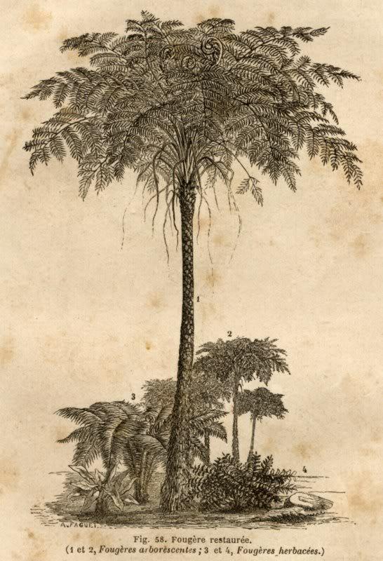 Représentation bidimensionnelle de la forêt houillère PLANCHES-6800x600