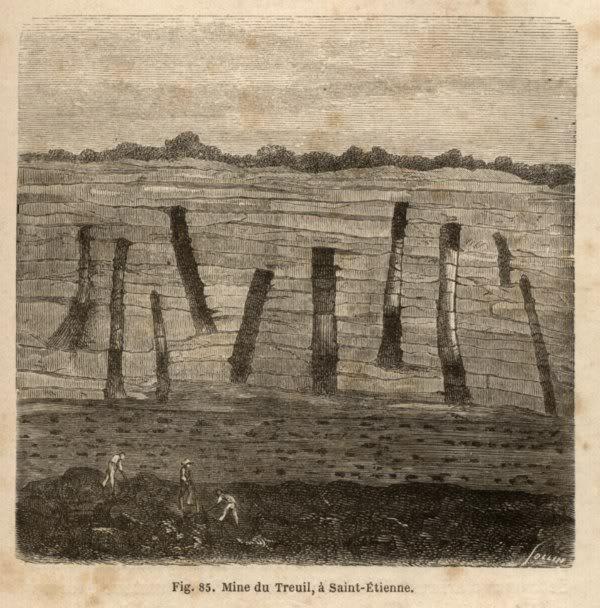 Représentation bidimensionnelle de la forêt houillère PLANCHES-7800x600