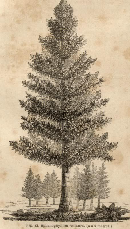 Représentation bidimensionnelle de la forêt houillère PLANCHES800x600