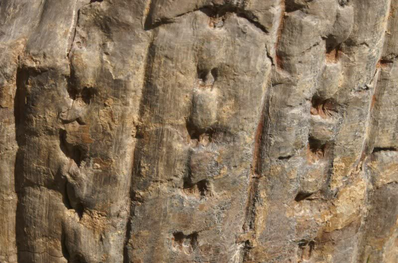 Sauvez les troncs ! Syringo-2800x600