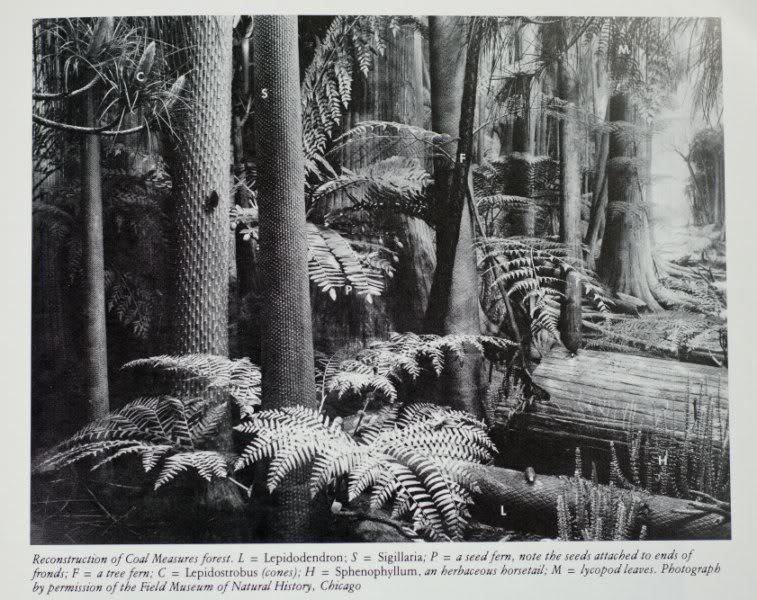 Représentation bidimensionnelle de la forêt houillère Fo-2800x600