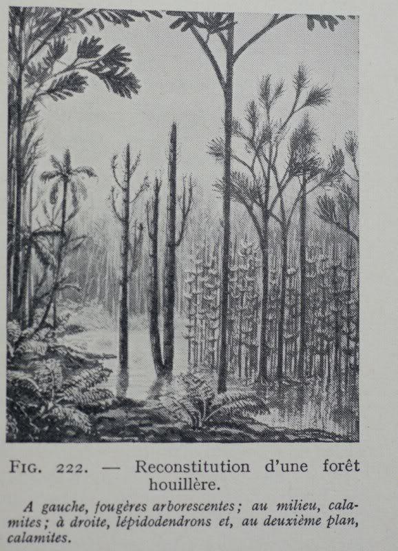 Représentation bidimensionnelle de la forêt houillère Fo-3800x600