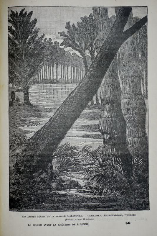 Représentation bidimensionnelle de la forêt houillère Fo800x600