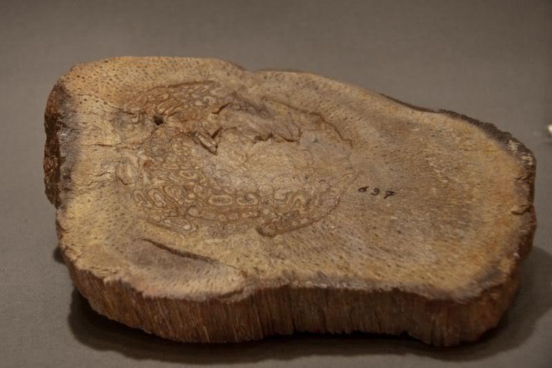Structures et bois fossiles Fougere-2800x600