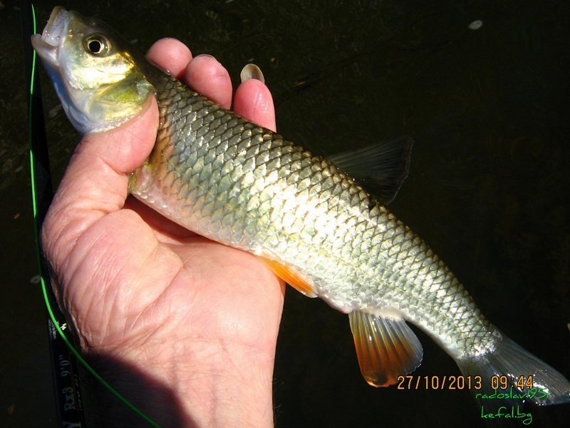 Риболов 2013 ... - Page 2 IMG_0508_zps5462137a