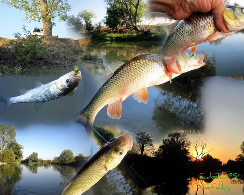 Риболов 2013 ... - Page 2 43A0_zps488e2065