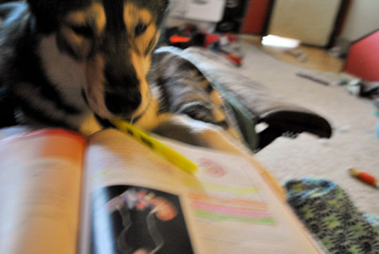 Izzy, Koozie, Keno, & Klutch ** UPDATED on 11-16-13** - Page 3 003_zps73f64217