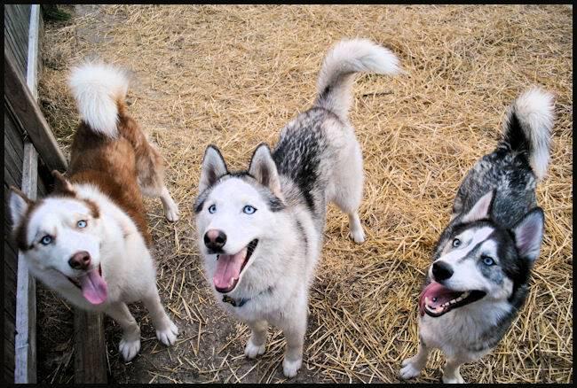 Husky Party 20101115_80
