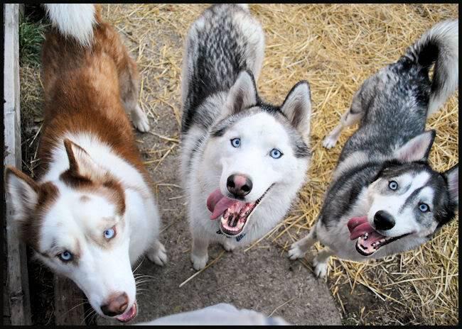 Husky Party 20101115_84