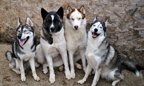 Izzy, Koozie, Keno, & Klutch ** UPDATED on 11-16-13** - Page 2 028