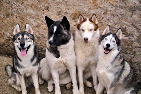 Izzy, Koozie, Keno, & Klutch ** UPDATED on 11-16-13** - Page 2 030