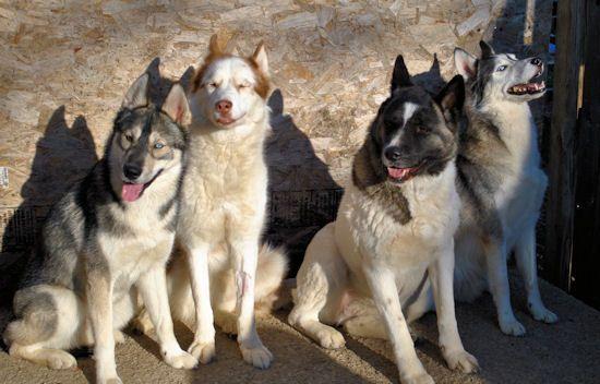 Izzy, Koozie, Keno, & Klutch ** UPDATED on 11-16-13** - Page 2 011