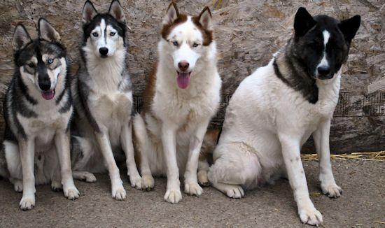 Izzy, Koozie, Keno, & Klutch ** UPDATED on 11-16-13** - Page 2 082