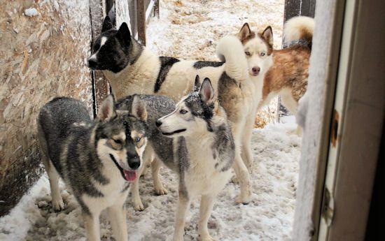 Izzy, Koozie, Keno, & Klutch ** UPDATED on 11-16-13** - Page 2 336
