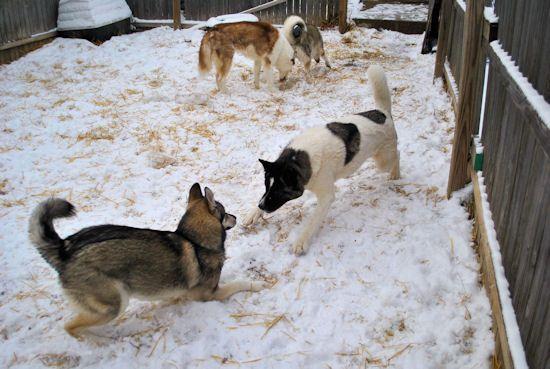 Izzy, Koozie, Keno, & Klutch ** UPDATED on 11-16-13** - Page 2 086_zpse574aa8a