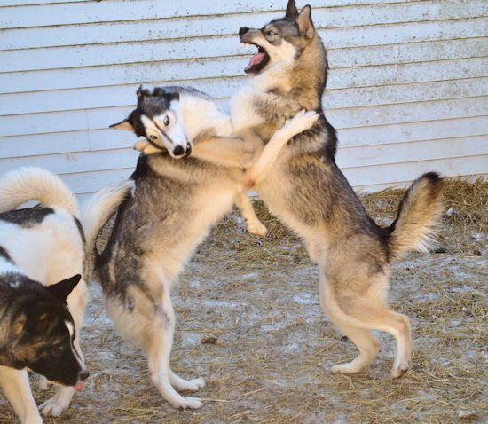 Izzy, Koozie, Keno, & Klutch ** UPDATED on 11-16-13** - Page 2 044