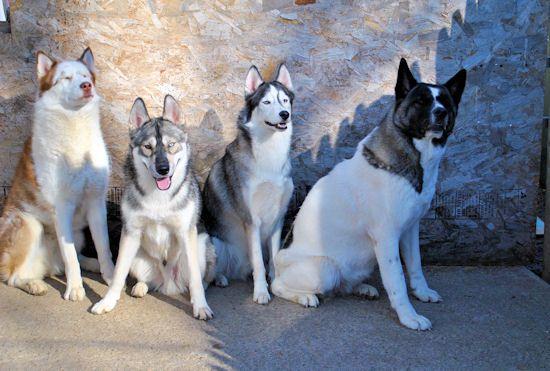 Izzy, Koozie, Keno, & Klutch ** UPDATED on 11-16-13** - Page 2 059