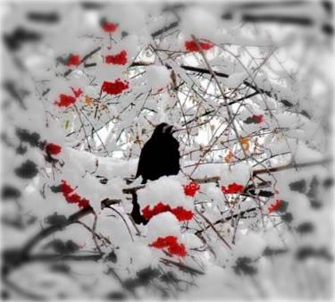 Trees (2) Winter