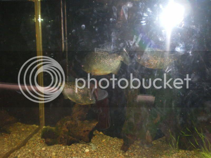 Phoenix Zoo IMGP4636