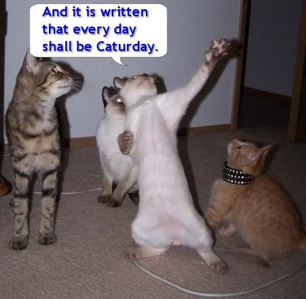 More funny photos! - Part 2 Caturday