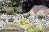 A few pix from my garden Th_Garden_Mamms_1009