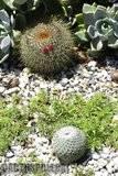 A few pix from my garden Th_Garden_Mamms_1209