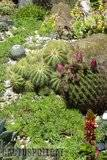 A few pix from my garden Th_Garden_Noto_magnifica_1209
