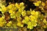 Some garden colour. Th_Echeveria_noid_2_1208_b