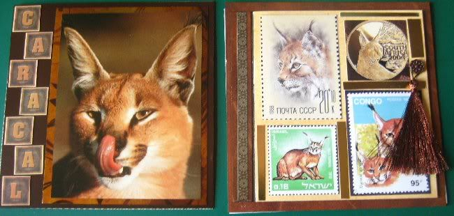 Ruth's Wild Cats Caracal