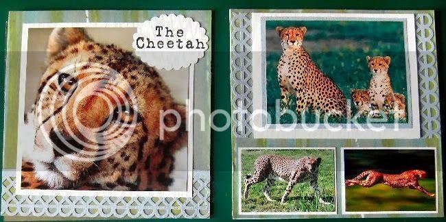 Ruth's Wild Cats Cheetah