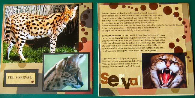 Ruth's Wild Cats Serval