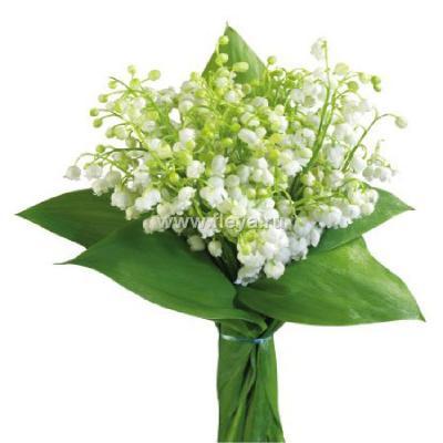 Поздравляем с Днем Рождения Наталью (ФНВ) 6f287d81d92b8105bb21d81dabf4465b