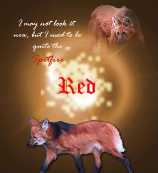 Akka's lupus specus Red2