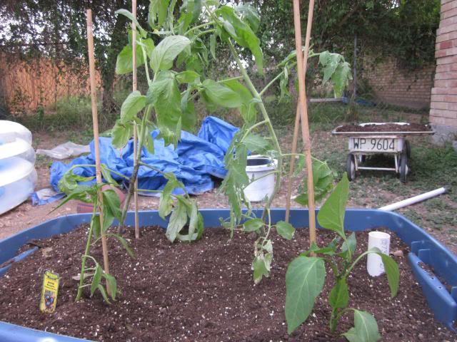 Self Irrigated Planter IMG_0788