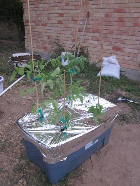 Self Irrigated Planter IMG_0793