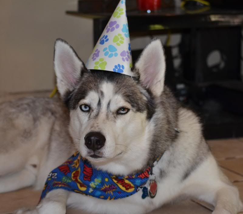 Happy 3rd Birthday to KODY!!!  *updated w/ doggy beer video* DSC_0977_zps341f71f5