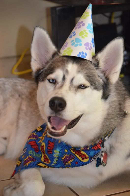 Happy 3rd Birthday to KODY!!!  *updated w/ doggy beer video* DSC_0988_zps149bb655