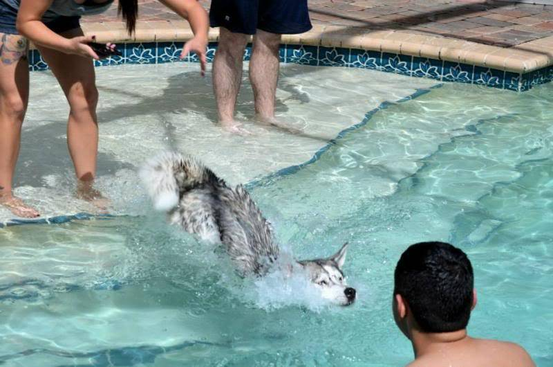 Husky Pool Party South FL Style!  1236577_10151858605375971_1324974381_n_zps317f9420