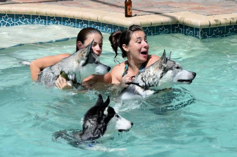 Husky Pool Party South FL Style!  1238848_10151858605720971_427625992_n_zps589bf001