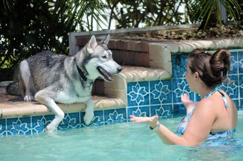 Husky Pool Party South FL Style!  578515_10151858605990971_908609040_n_zpscdbc9cb5