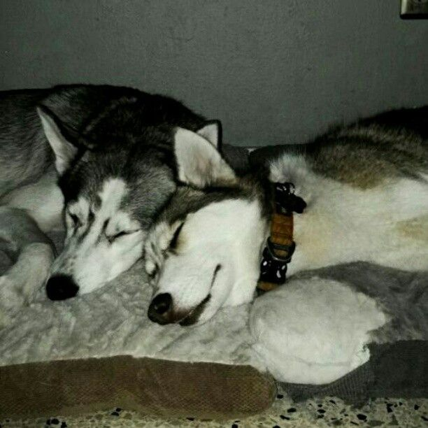Mya, Kody, & Asia's Pix- DROP CAM FUN! * and ANOTHER ONE* - Page 14 Husky3
