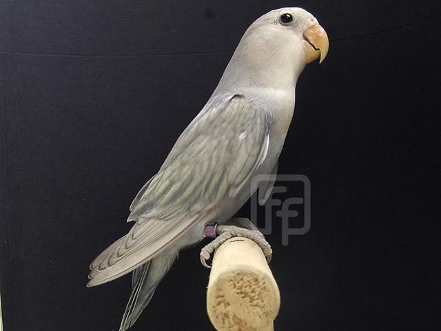 Moje ptice IMG_0102