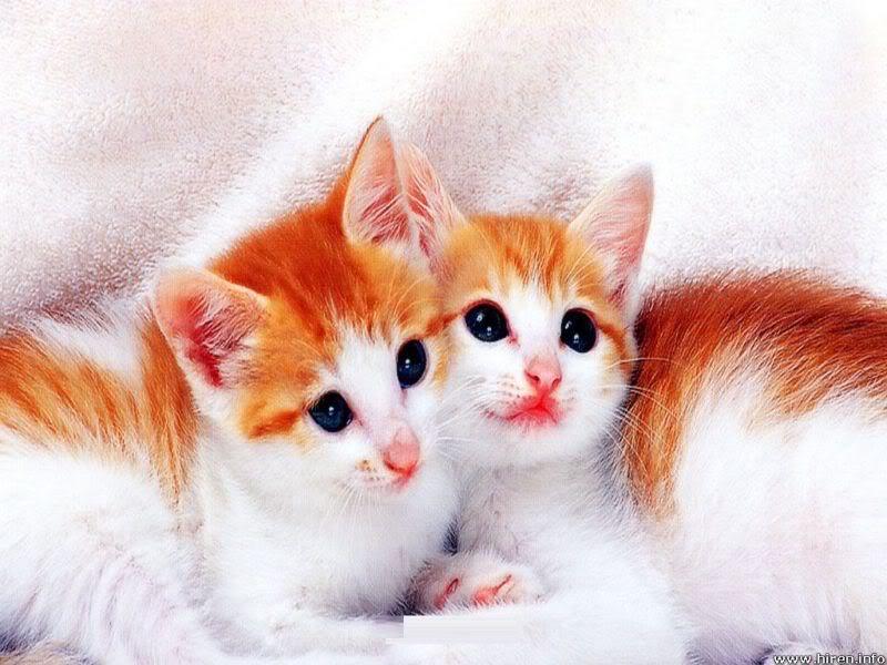 New Topics. Cute-kitty-cat1