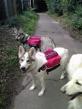 Discover Dogs 8th & 9th November Backpacks1-1