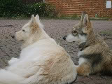 Discover Dogs 8th & 9th November Wolfieandthegirls013-1